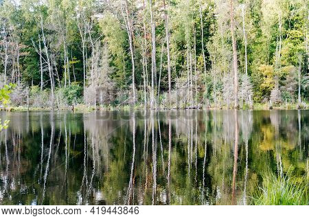 Forest Natural Pond. Lake Or Fishing Pond. Landscape A Beautiful Pond.