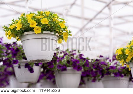 Nature, Botany, Plant Breeding And Exhibition In Greenhouse