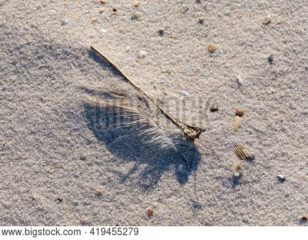 Closeup Of Bird Feather, Twig, Sea Shells And Grains Of Sand On Beach In Gulf Shores, Alabama, Usa