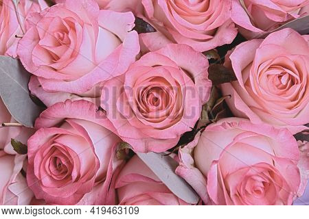 Beautiful Pink Background. Colorful Pink Wall Background.