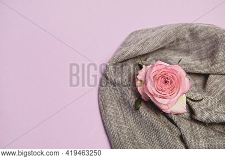 Pink Rose On A Knitted Fabric In Pastel Colors. The Concept Of Minimal Nature. Flat Layout, Top View