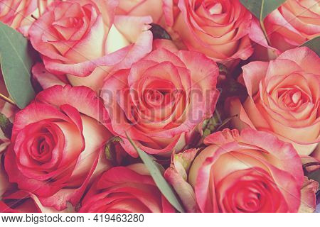 Beautiful Pink Background. Colorful Pink Wall Background