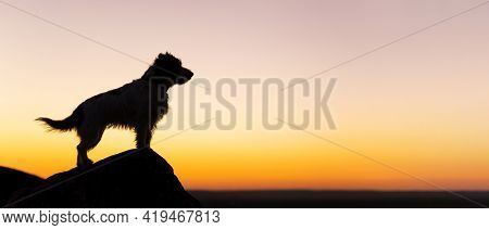Silhouette Background Of A Beautiful Happy Jack Russell Terrier Pet Dog. Summer Sunset, Sunrise Land