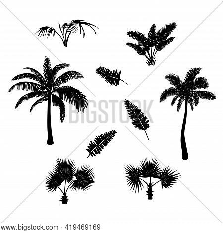 Silhouette Palm Leaves Drawn. White Background. Nature Landscape. Banana Leaves. Vector Illustration