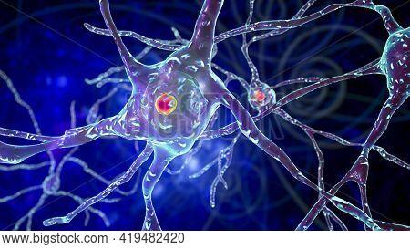 Intranuclear Inclusion In Neurons Of Dorsal Striatum, 3d Illustration. Dorsal Striatum Is A Nucleus