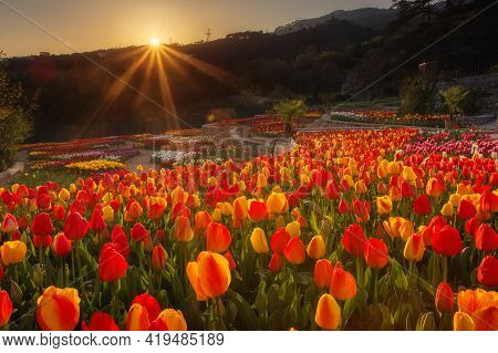 Yalta, Russia-april 28, 2021: Exhibition Of Tulips In The Nikitsky Botanical Garden. Beautiful Brigh