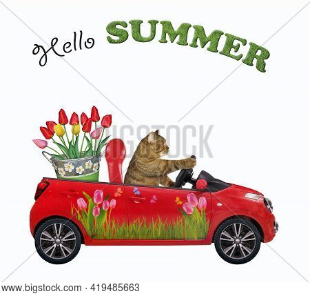 A Beige Cat Drives A Red Car With A Pail Of Tulips. Hello Summer. White Background. Isolated.