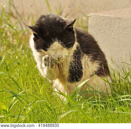 Cat Licking Its Fur In The Grass, Cleaning, Washing