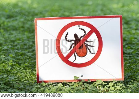 Lawn Is Protected From Insects. Insecticides. Insect Control