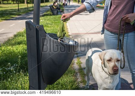 Young Woman Puts Feces In Bag In A Garbage Can She Picked Up After Her Pet Dog A Golden Labrador Ret