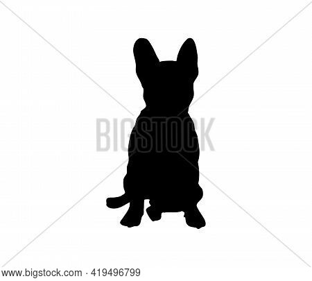 Sit. French Bulldog Silhouette. Good Dog Sits Full Face