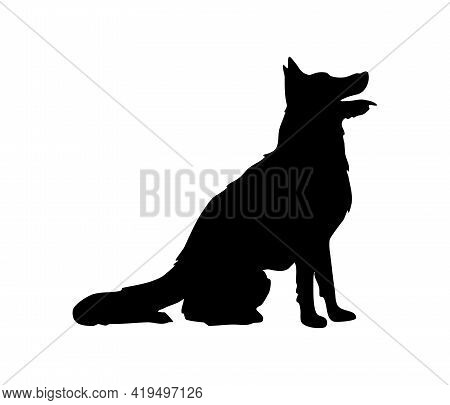 Faithful Companion Of The Police. The Shepherd Sits Waiting For The Command