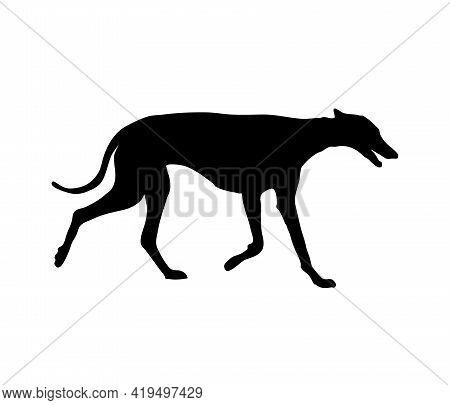 Greyhound Elegant Dog Trotting Silhouette. Hunting Companion