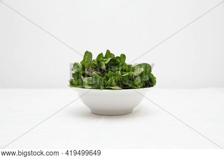 A White Deep Plate With Mint Stands On A White Table Against A White Wall. Green Fresh Mint Is Very