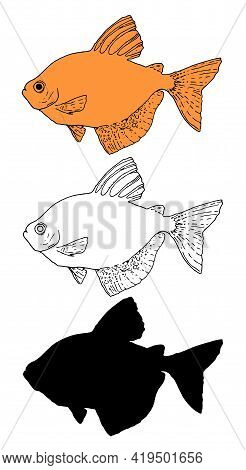 Vintage Sketch Illustration With Black Aquarium Fish Sketch On Red Background. Beautiful Set For Dec