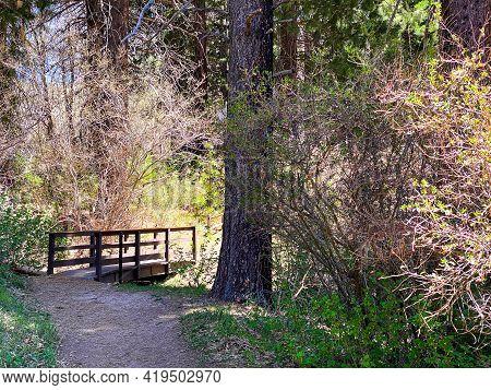 Hiking Trail Walking Path With Brook Creek Stream Wooded Bridge And Lush Foliage Landscape Nature Ba