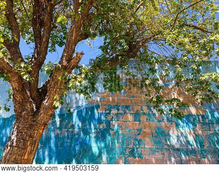 Colorful Bright Green Tree In Front Of An Old Vintage Fading Alley Park Building With Peeling Paint