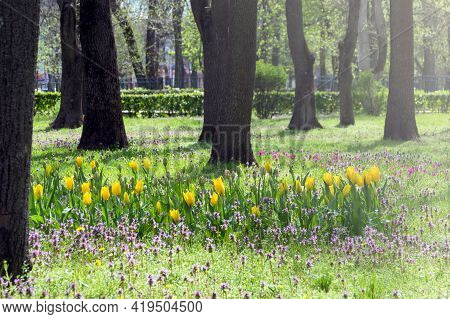 Multi-colored Spring Flowers In The Park In Early Spring. Tulips, Daffodils And Wild Herbs In The Su