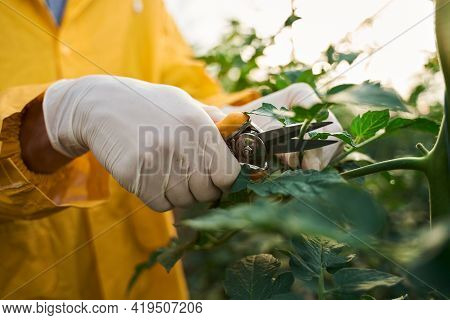 Farmer Using Secateurs For Looking After Plants