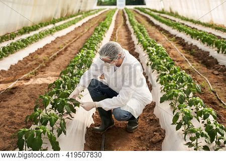 Male Agronomist Looking After Plants In Hothouse