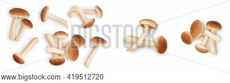 Honey Fungus Mushrooms Isolated On White Background With Clipping Path And Full Depth Of Field. Set