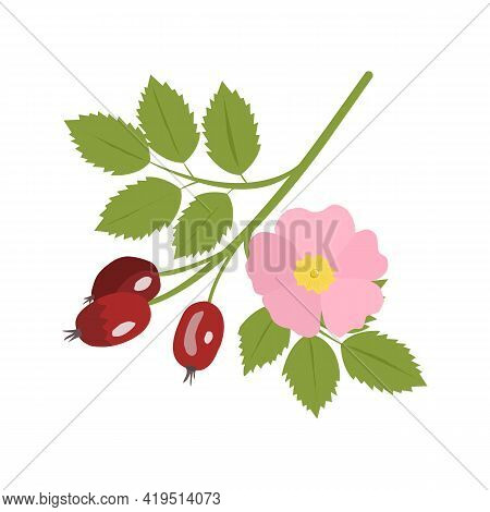 Dog-rose Branch With Leaves And Flowers. Wild Rose. Invitation Card. Vector Illustration.