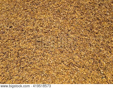Rice Husk Or Rice Hulls Use For Various Purpose. It Is The Hard Coating Of Rice.