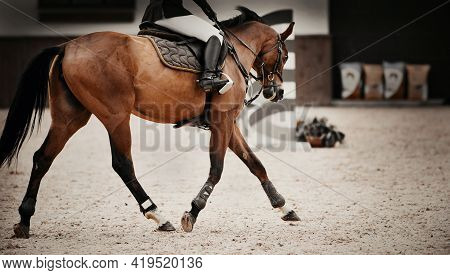 Equestrian Sport. The Leg Of The Rider In The Stirrup, Riding On A Bay Horse. Chestnut Horse Trottin