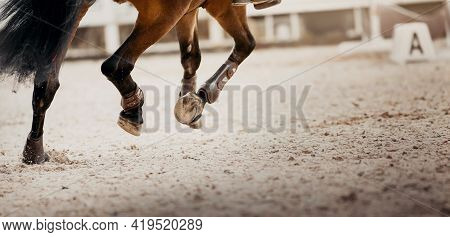 Feet Running Sports Bay Horse. Legs Of A Sporting Horse In Knee-caps. Dust Under The Horse's Hooves.