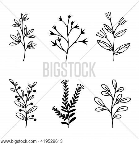 Group Of Vector Natural Elements Branches With Leaves And Wild Herbs. Hand Drawn Plants In Doodle St