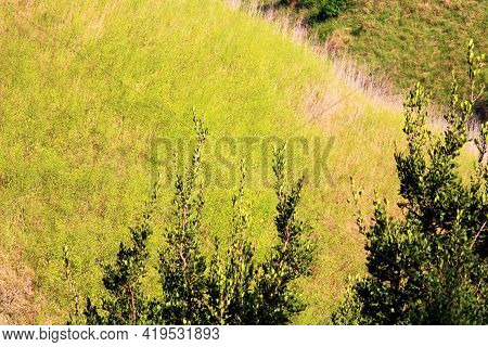 Lush Canyon With Hillside Slopes Covered With Grasslands And Mustard Plant Flower Blossoms During Sp