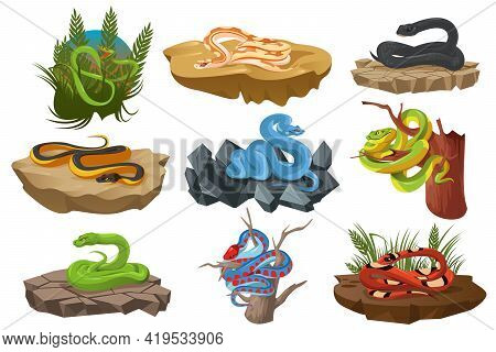 Snakes, Tropical Serpents On Tree, Ground And Stones. Black Mamba, Scarlet Milk Snake, California Re