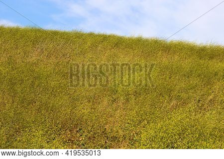 Windswept Grasslands With Mustard Plant Wildflowers During Spring On A Lush Hillside Taken At A Prai