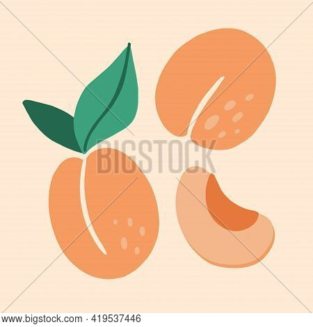 Apricot. Exotic Tropical Peaches Or Apricots Fresh Fruit. Whole And Half Juicy Peach. Vector Cartoon