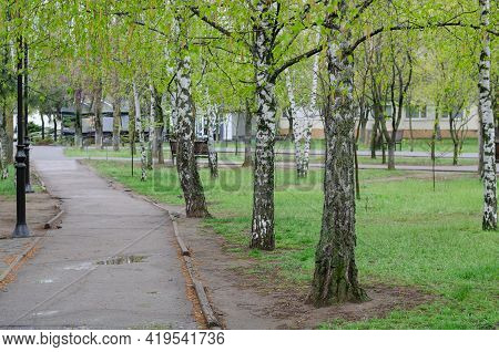 A Wet Gray Path Next To A Green Lawn. An Empty Path In The Park Among The Birches After The Spring R
