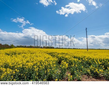 Landscape Scenery Of Bright Yellow Flowering Rapeseed (brassica Napus) Field On A Bright Sunny Day W