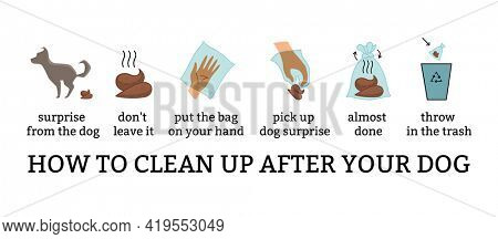 Dog poo clean up steps infographic set.  poster about hygiene animal, toilet cleaning information after your dog step by step. Picking waste in canine bag and throw in the trash