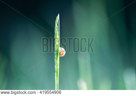 Small snail spring morning Nature background Nature animal grass Nature background meadow Nature background Macro Nature animal Nature. Nature background snail on grass Nature background animal Nature snail animal Nature background