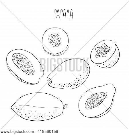 Papaya. Set Of Hand Drawn Papaya. Fresh Organic Food. Vector Illustration With Ink Outline Black Ske