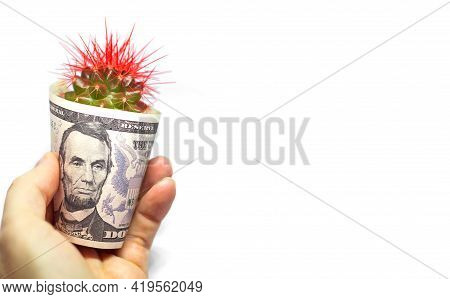 American Dollar Hand And Cactus, Concept Of Business And Finance Banking Operations And Obstacles To