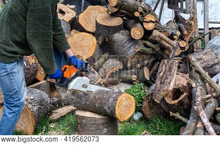 Preparing Firewood For The Winter, Cherry Logs Piled In A Heap In The Yard, A Farmer Sawing A Log Wi