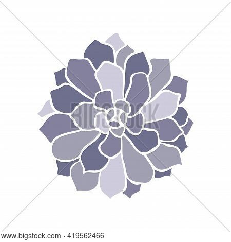 Beautiful Collection With Lilac Succulent Cactus Hand Drawn Top View For Decoration Design. Vector T