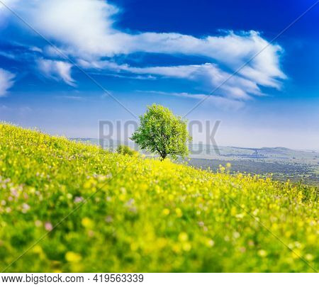 Lonely Tree On the Green Field , Golan Heights, Beautiful nature of Israel, Spring In Israel