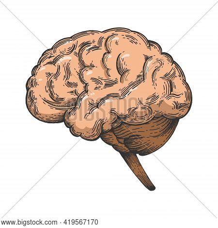 Human Brain Schematic Vintage Color Sketch Engraving Vector Illustration. Scratch Board Style Imitat