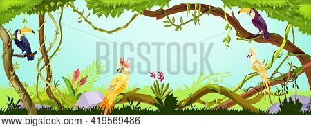 Jungle Forest Background, Nature Green Wood Landscape, Toucan, Parrot, Liana, Tree Branches, Stone,