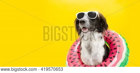 Puppy Border Collie Dog Summer Inside Of A Watermelon  Inflatable Wearing Sunglasses Looking Away. I