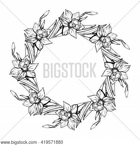 Floral Round Wreath With Outline Flowers Narcissus, Daffodil Drawn By Hand.. Black And White Monochr