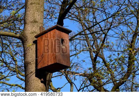 Acer, Attached, Bark, Beautiful, Bird, Birdhouse, Blue, Box, Branch, Brown, Burning, Burnt, Camoufla