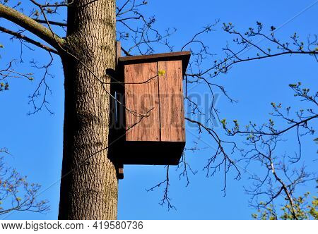 On A Branched Tree Is A Wooden Birdhouse Attached To A Tree In The Color Of Burnt Brown Flame Camouf