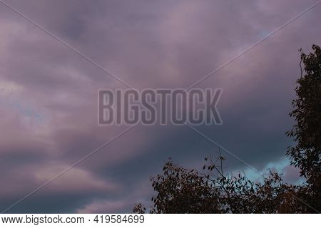 Picture Of Pink Clouds And Tree Leaves